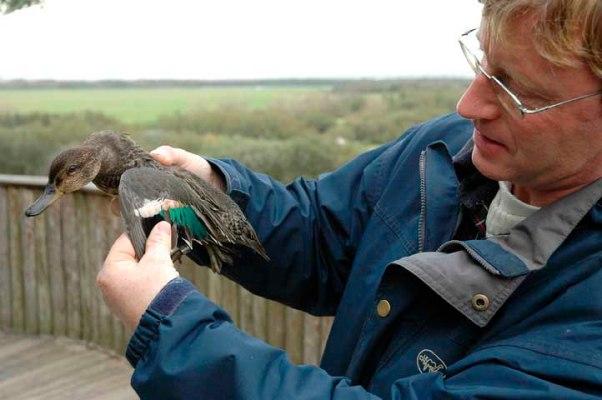 Krickente im Vogelpark von Marquenterre (c) Michael Kneffel