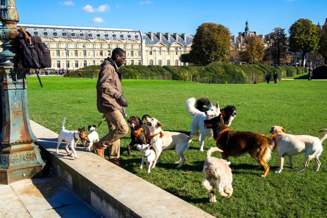 Dogwalker in Paris © Michael Kneffel