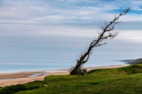 verkümmerter Baum über dem Omaha Beach © Michael Kneffelaum über dem Omaha